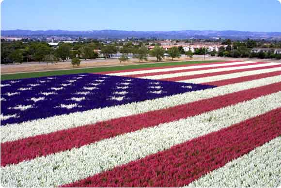 US Flag of flowers